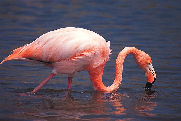 Isabela II's 7-Day Itinerary Day Four - Flamingo Sighting.
