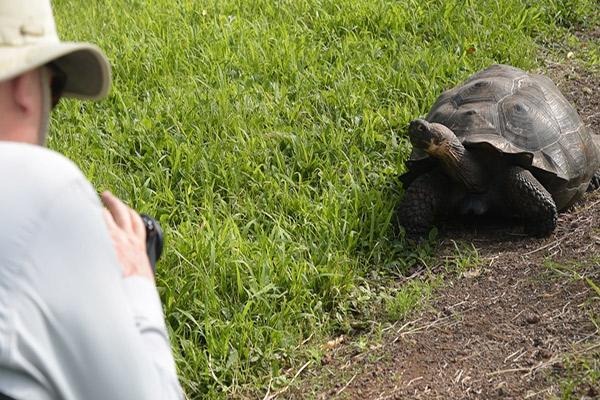 Alya's 6-Day Itinerary B Day Two - Giant Tortoises.