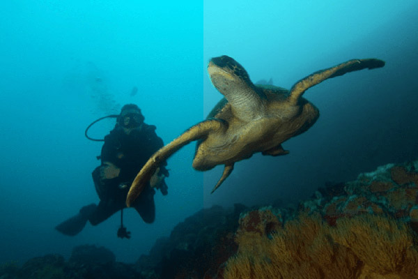 Grand Majestic's 4-Day Itinerary Day Two - Snorkelling with Turtles.