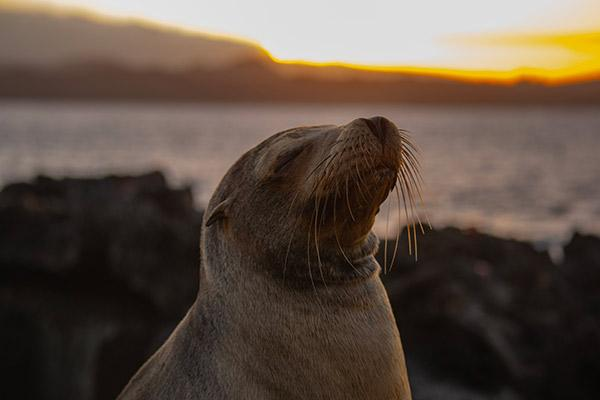 Grand Majestic's 5-Day Itinerary Day Two - Sea Lion in the Sunset.