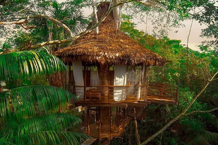 Treehouse Lodge's Bamboo House Cabin - Exterior.