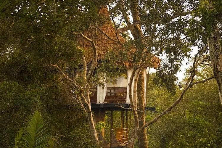 Treehouse Lodge's Solitude Cabin - Exterior.