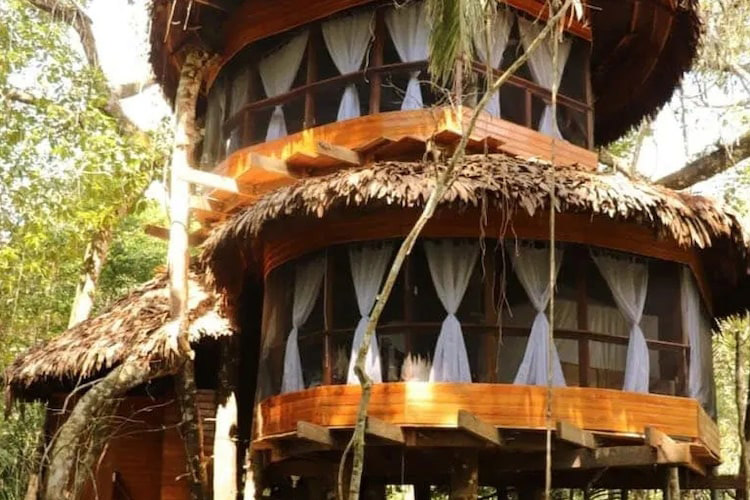 Treehouse Lodge's Swiss Robinson Cabin - Exterior.