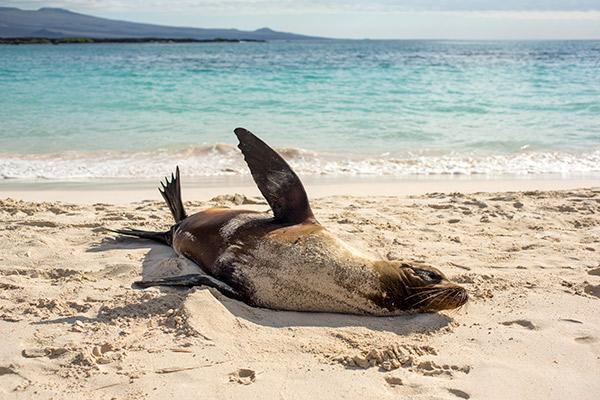 Galapagos Legend's 8-Day 'B+C' Itinerary Day One - Sea Lion on the shore.