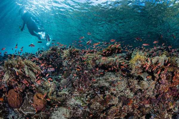 Sequoia's 8-Day Batanta Waigeo - Day Four - Amazing Corals View while Snorkeling
