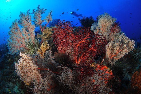 Sequoia's 11-Day Komodo Sumbawa - Day Eight - Beautiful Corals