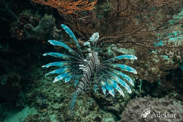 Adelaar's 11-Day Signature Bali Komodo Bali - Day Eight - Fairy Fish