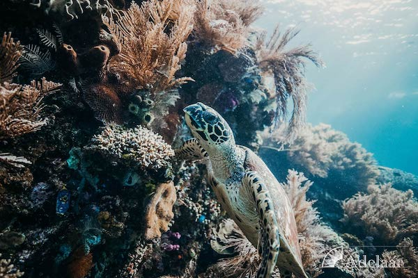 Adelaar's Komodo Extended Bali - Komodo - Day Seven - Turtle City