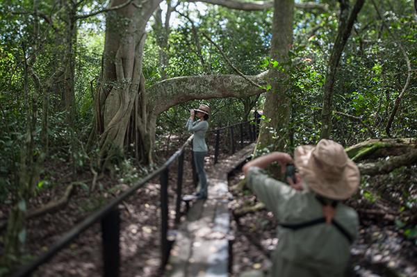 Araras Eco Lodge's 4-Day Pantanal Stay Day One - Jungle Walk.