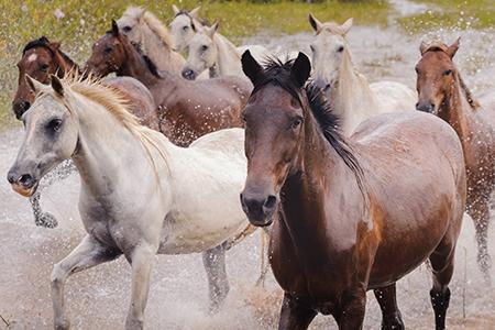 Araras Eco Lodge's 4-Day Horseback Riding Stay Day Two - Pantaneiro Horses.