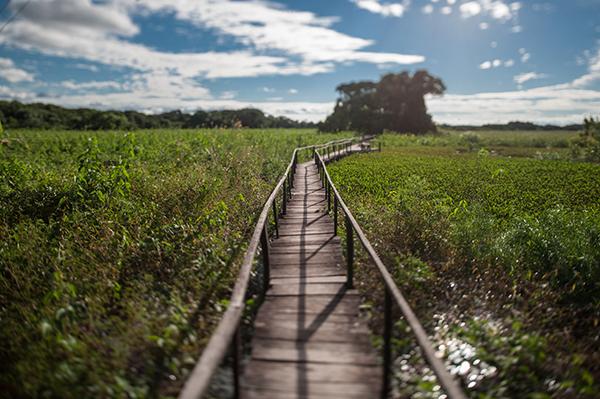 Araras Eco Lodge's 4-Day Pantanal Stay Day Three - Jungle Trails.