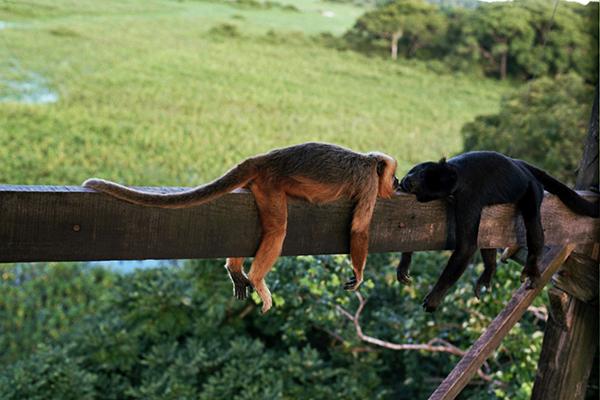 Araras Eco Lodge's 5-Day Pantanal Stay Day Two - Jabiru Stork Tower.