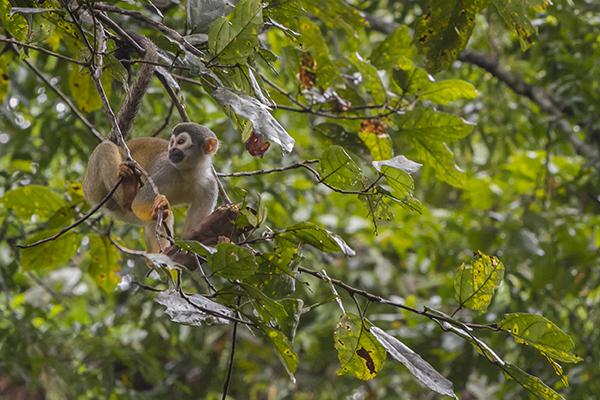 Treehouse Lodge's 3-Day Itinerary Day Three - Monkey Sighting.