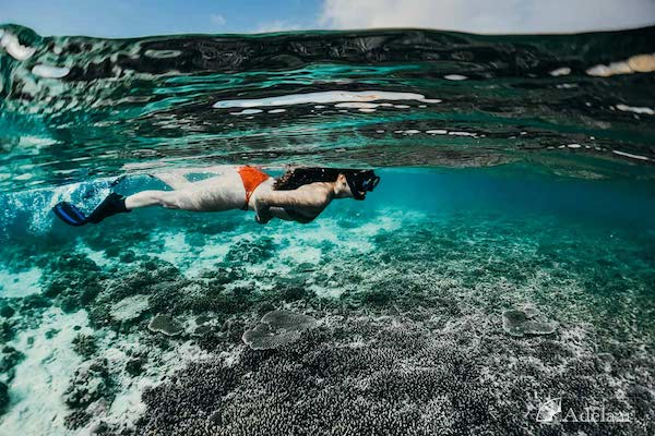 Adelaar's 12-Day Alor & The Forgotten Island: Saumlaki to Maumere - Day Two - Snorkeling
