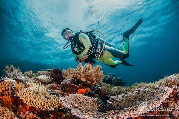 Adelaar's 12-Day Alor & The Forgotten Island: Maumere to Saumlaki - Day Four - Diving