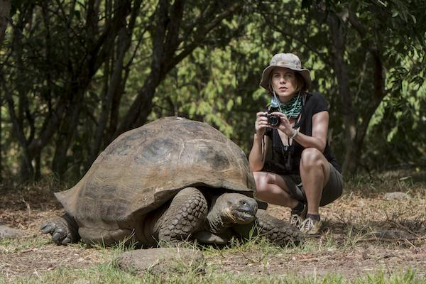 Galapagos Legend's 8-Day 'B+C' Itinerary Day Eight - Galapagos Giant Tortoise.