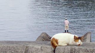 猫の上に乗っている釣り人の小さいおじさん