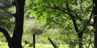 Het beste spiritueel reisverhaal van 2016: Dat kleine hoekje op de Veluwe