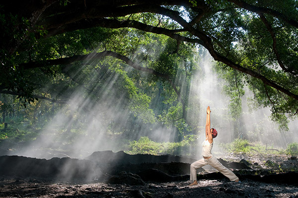 Wat is forest bathing?