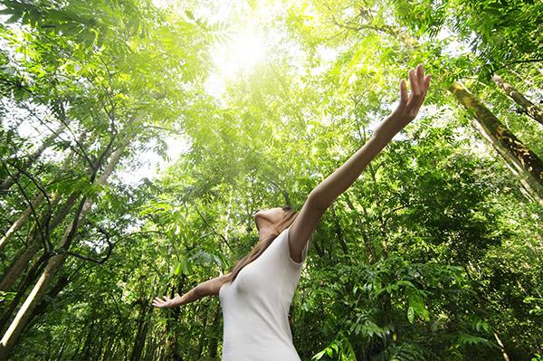 energie van bomen