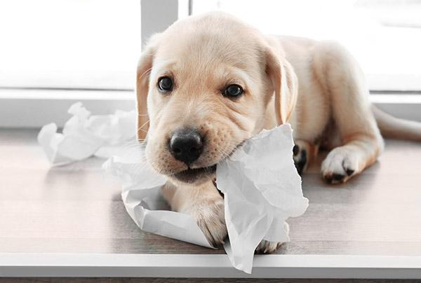 Wat is compassie? Vraag het een puppy!