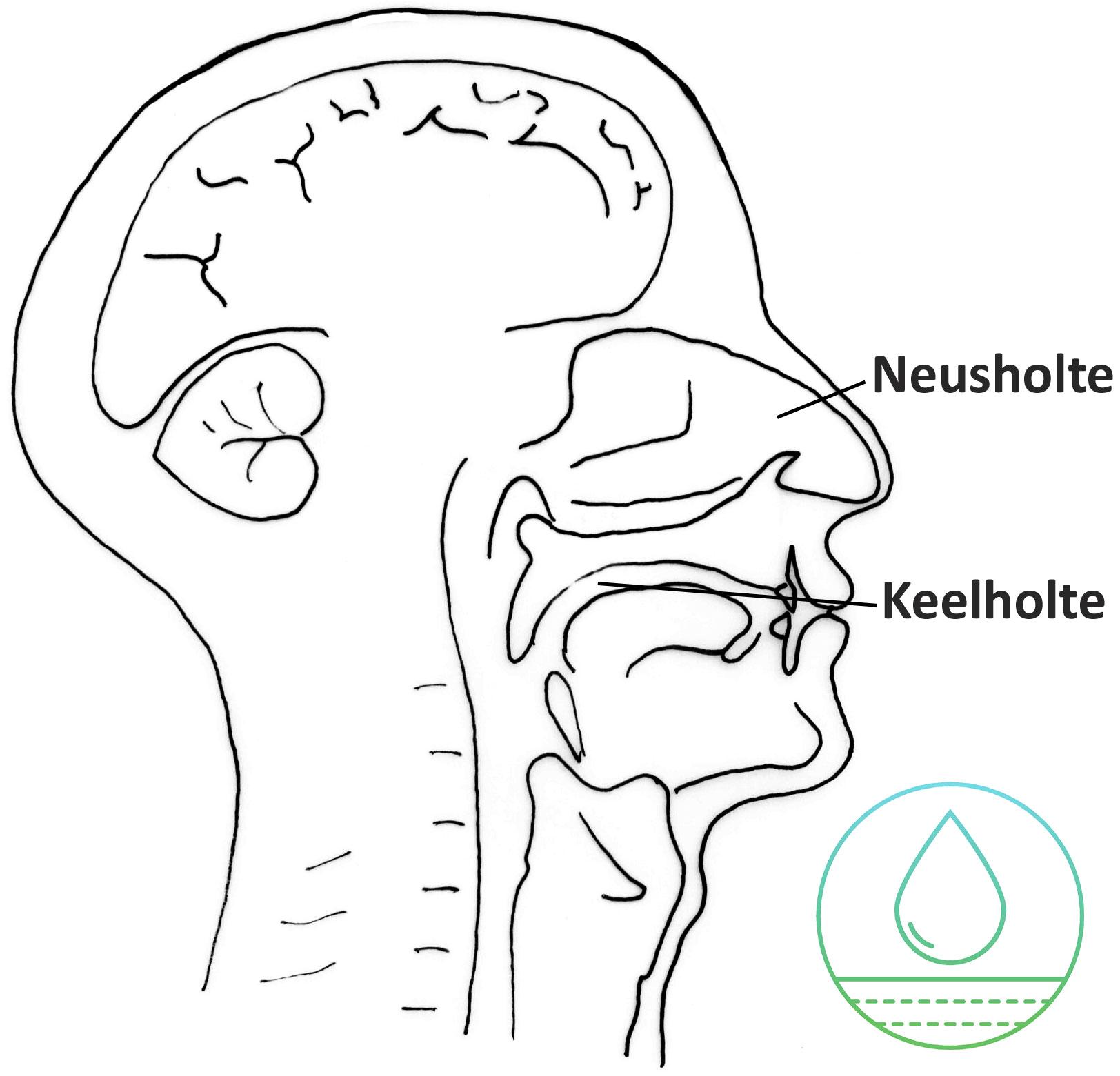 Het is belangrijk om keel- en neusholten schoon en vrij van kapha te houden.