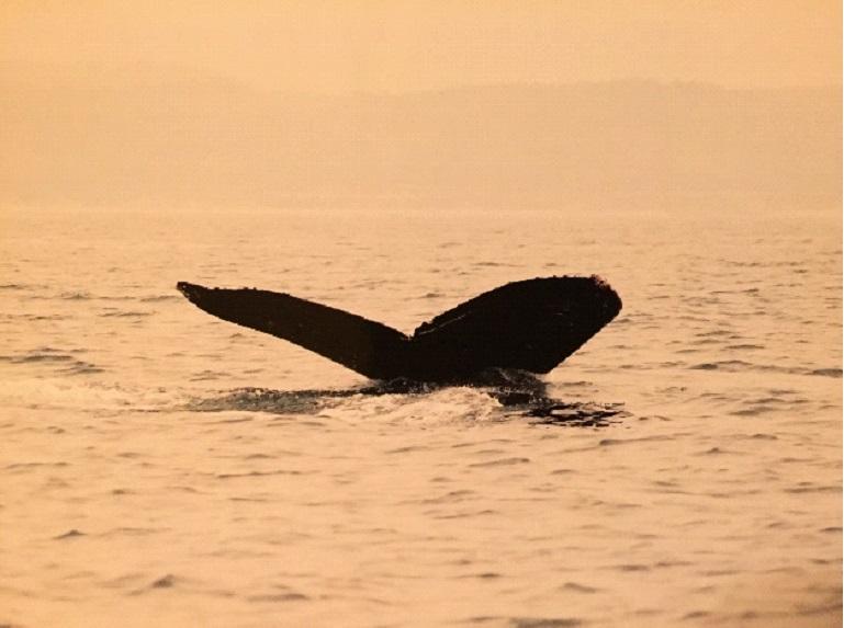 Spiritueel reisverhaal: Magisch Mexico. De walvis.