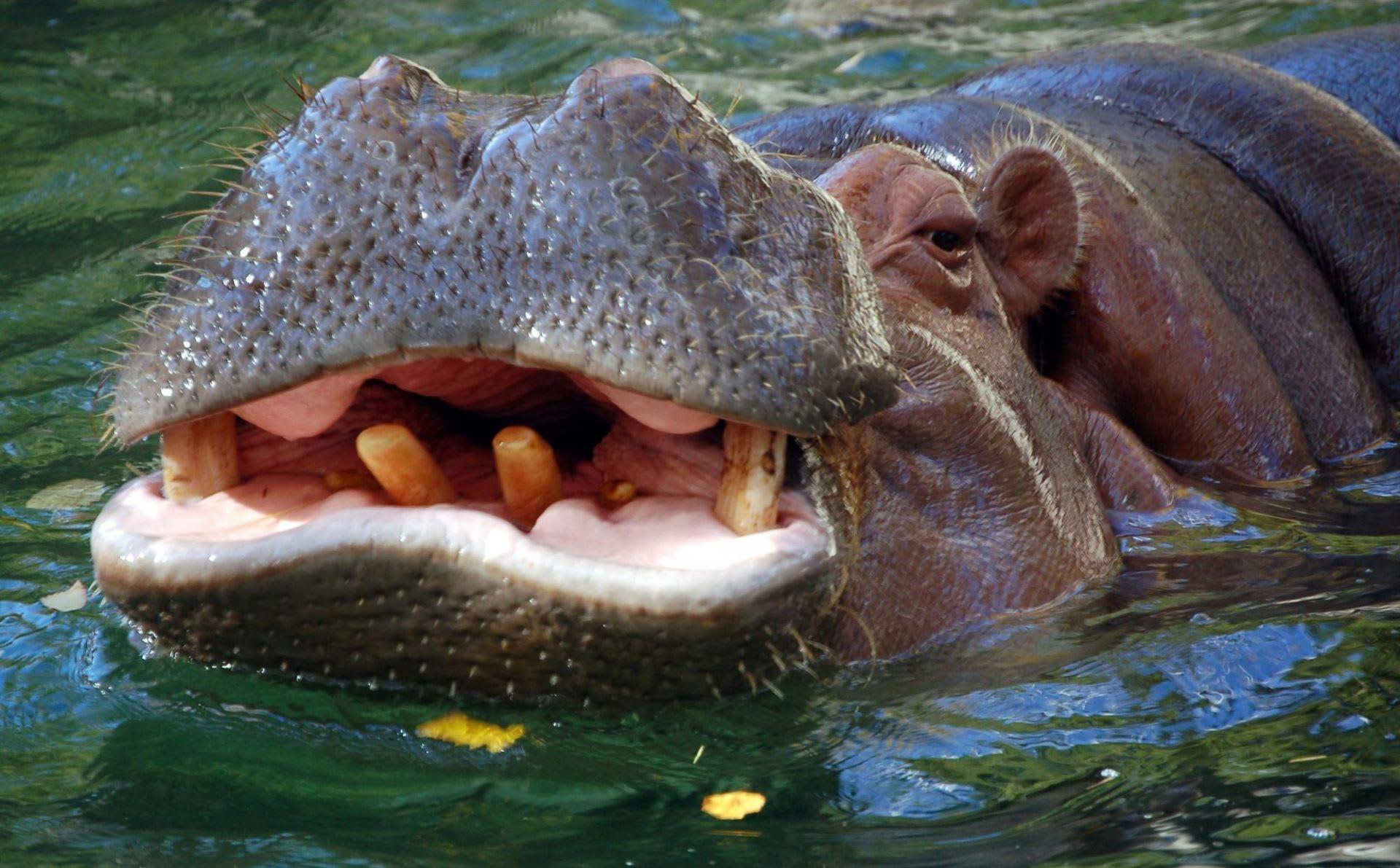 Spiritueel reisverhaal - Het nijlpaard