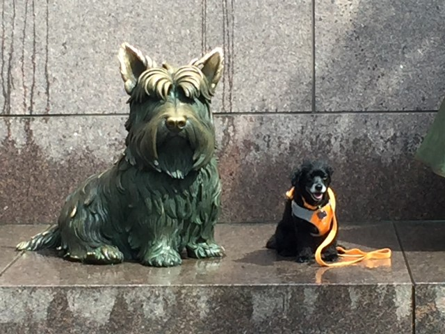 Dog Friendly Tour at the FDR Memorial