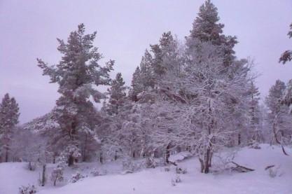 Saariselka Snow.jpg