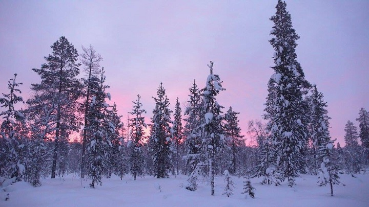 sunrise in Lapland