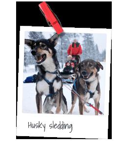 husky-sledding_new.png