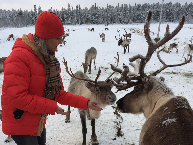 feeding reindeer centre santa's lapland
