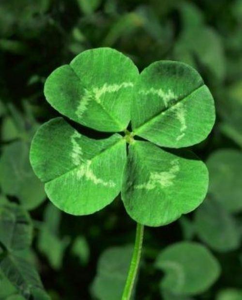 Saint Patrick's Day & 4-Leaves-Clover