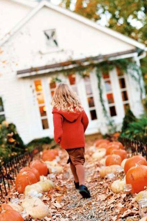 Pumpkin-Trail