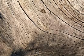 element wood In feng shui