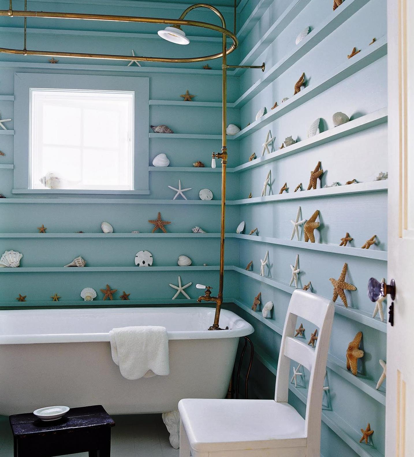 A Seashell Gallery