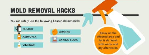 Mold remedies infographic