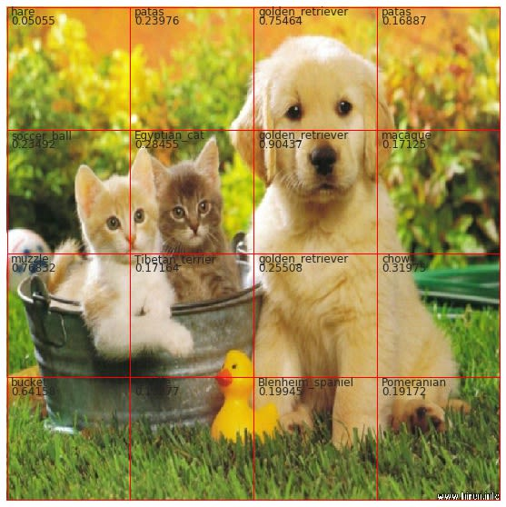 Cats and Dogs - 16