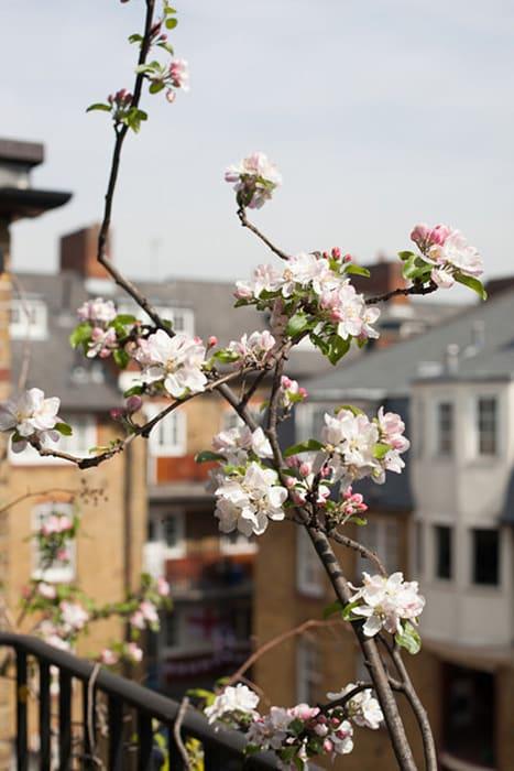 inner city apple tree II by Wolfgang Tillmans