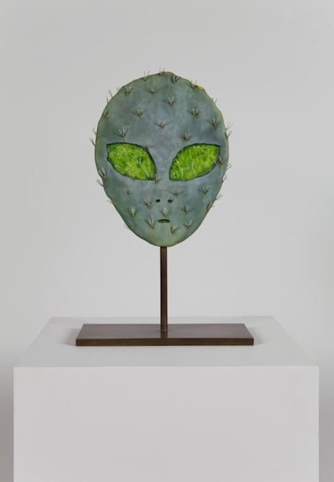 Alien Cactus by Matt Johnson