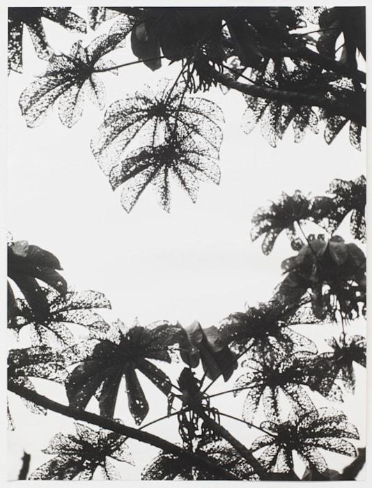 Untitled (Cecropia) by Jochen Lempert