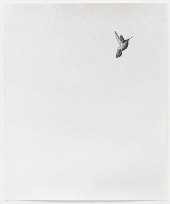 Untitled (Colibri II) by Jochen Lempert