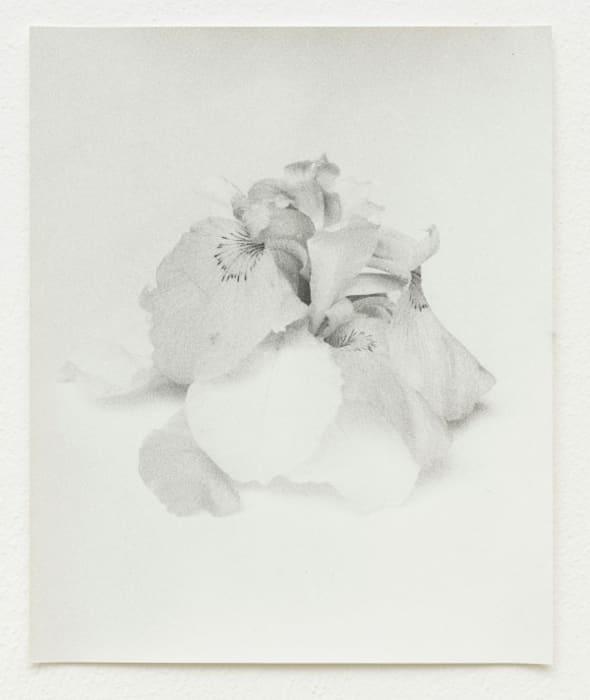 Tripled Iris 2 by Jochen Lempert