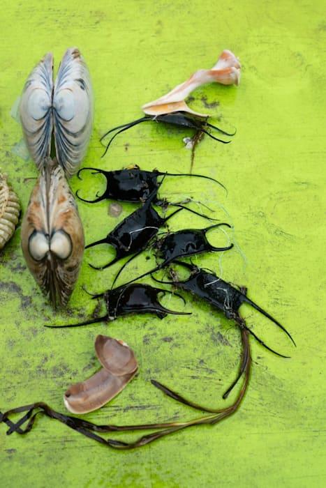 """""""still life (mermaid's purse)"""" by Wolfgang Tillmans"""