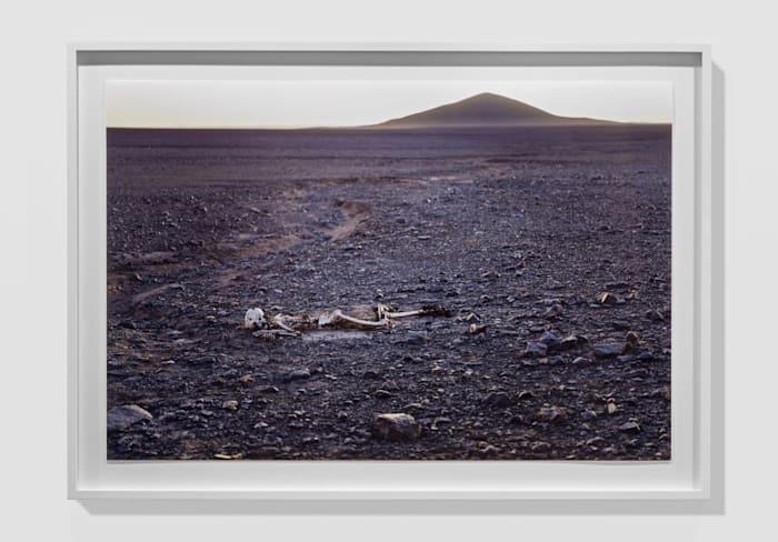 Cerro Indio Muerto by Pierre Huyghe