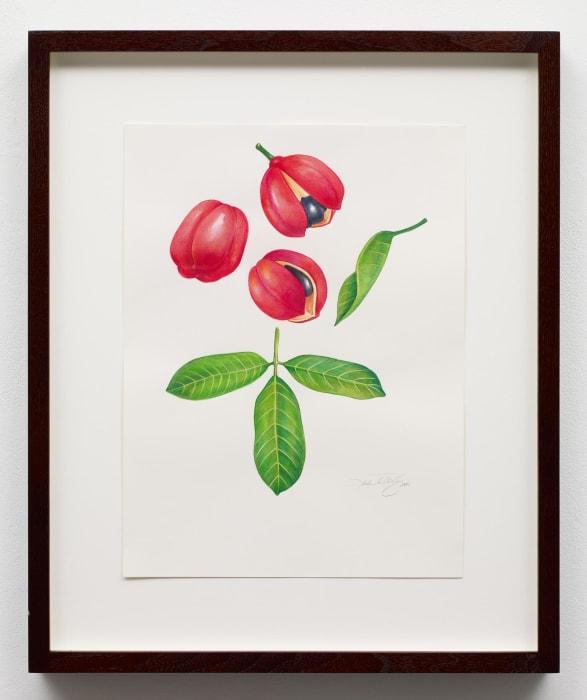 Sterculia Chicha by Kehinde Wiley