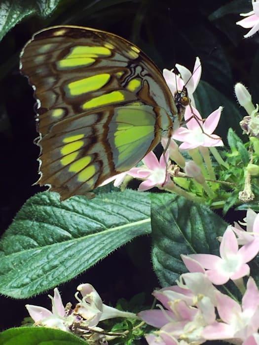 Butterfly by Roe Ethridge