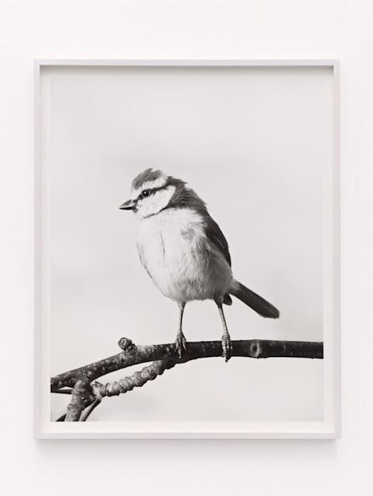 Bird by Jonas Dahlberg