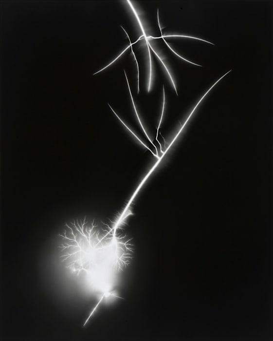 Lightning Fields 130 by Hiroshi Sugimoto